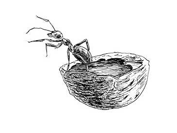 Hooger Nüsse Buchillustration: Ozean für eine Ameise