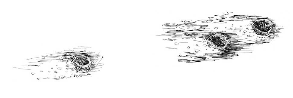 Hooger Nüsse Buchillustration: Nüsse